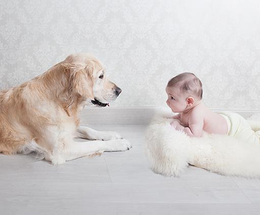 Books de bebes y mascotas