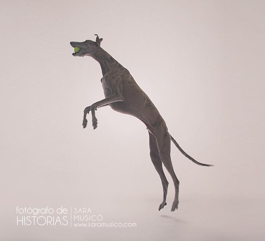 fotografo-de-perros-madrid
